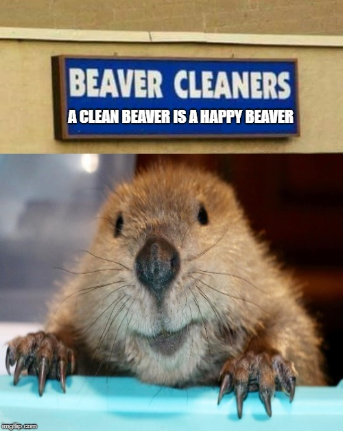 beaver cleaners | A CLEAN BEAVER IS A HAPPY BEAVER | image tagged in beaver,cleaners | made w/ Imgflip meme maker