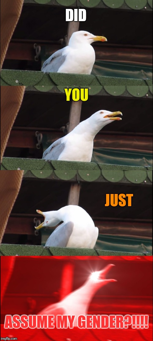 Triggered bird | DID YOU JUST ASSUME MY GENDER?!!!! | image tagged in memes,inhaling seagull | made w/ Imgflip meme maker