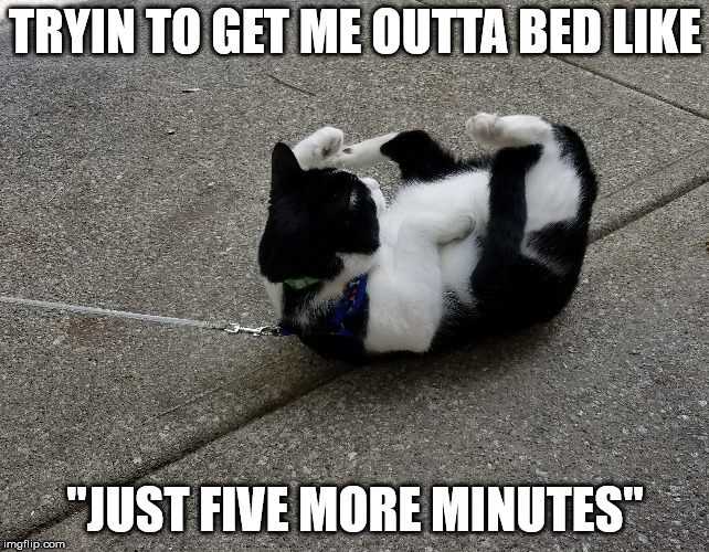 "Mornings | TRYIN TO GET ME OUTTA BED LIKE ""JUST FIVE MORE MINUTES"" 