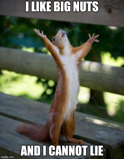Happy Squirrel | I LIKE BIG NUTS AND I CANNOT LIE | image tagged in happy squirrel | made w/ Imgflip meme maker