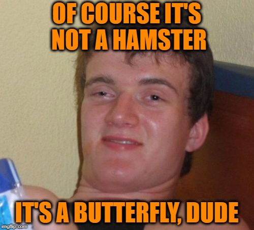 10 Guy Meme | OF COURSE IT'S NOT A HAMSTER IT'S A BUTTERFLY, DUDE | image tagged in memes,10 guy | made w/ Imgflip meme maker