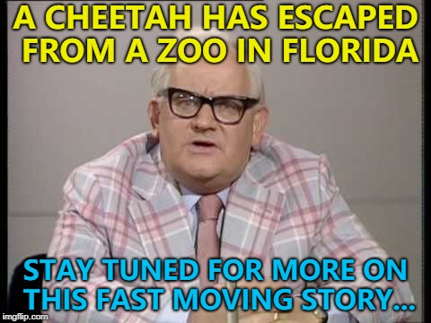 Apparently it's been spotted... :) | A CHEETAH HAS ESCAPED FROM A ZOO IN FLORIDA STAY TUNED FOR MORE ON THIS FAST MOVING STORY... | image tagged in ronnie barker news,memes,cheetah,animals,zoo | made w/ Imgflip meme maker