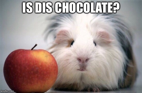 IS DIS CHOCOLATE? | made w/ Imgflip meme maker