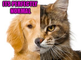 ITS PERFECTLY NORMAL | made w/ Imgflip meme maker