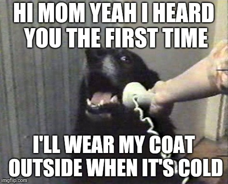 Overbearing can be dog gone bad... | HI MOM YEAH I HEARD YOU THE FIRST TIME I'LL WEAR MY COAT OUTSIDE WHEN IT'S COLD | image tagged in hello this is dog,memes | made w/ Imgflip meme maker