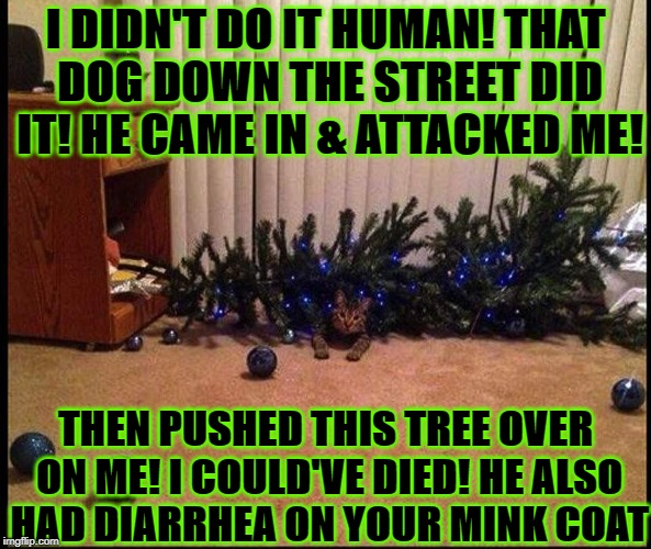 I DIDN'T DO IT HUMAN! THAT DOG DOWN THE STREET DID IT! HE CAME IN & ATTACKED ME! THEN PUSHED THIS TREE OVER ON ME! I COULD'VE DIED! HE ALSO  | image tagged in liar | made w/ Imgflip meme maker