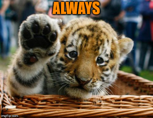 Tiger 5 | ALWAYS | image tagged in tiger 5 | made w/ Imgflip meme maker