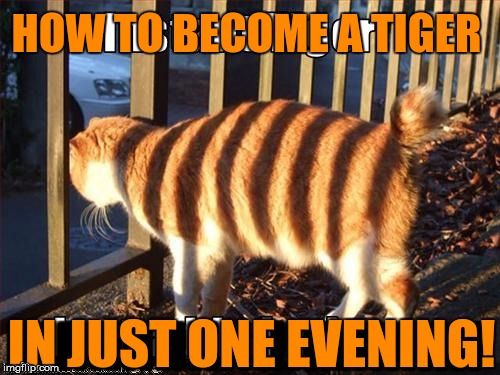 Not as hard as it may seem . . . Tiger Week 2018, July 29 - August 5, a TigerLegend1046 event | GE | image tagged in memes,tiger week,tiger week 2018,tigerlegend1046,cat,instructions | made w/ Imgflip meme maker