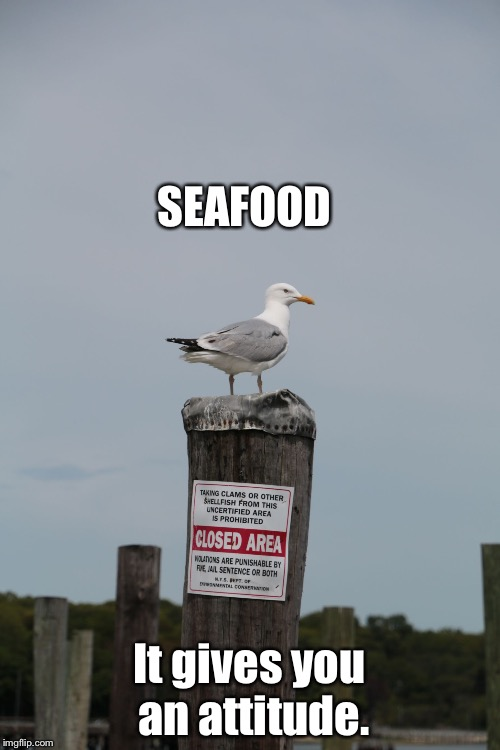Seafood. Gives you an attitude. | SEAFOOD It gives you an attitude. | image tagged in seagull on post | made w/ Imgflip meme maker