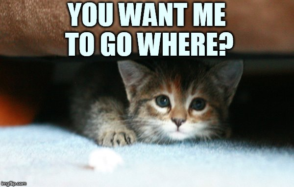 What? | YOU WANT ME TO GO WHERE? | image tagged in memes,cat,hiding,me,go,where | made w/ Imgflip meme maker