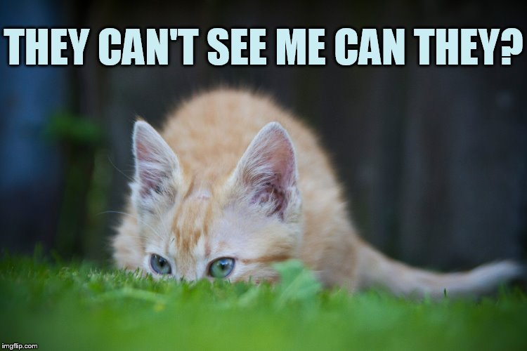 Oh My... | THEY CAN'T SEE ME CAN THEY? | image tagged in memes,cat,hiding,you can't see me,nothing to see here | made w/ Imgflip meme maker