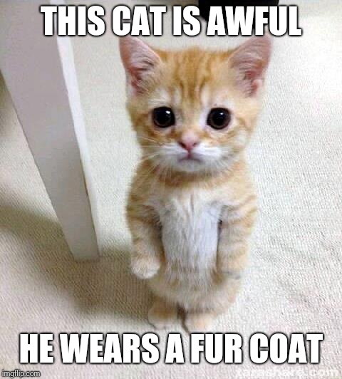 Cute Cat | THIS CAT IS AWFUL HE WEARS A FUR COAT | image tagged in memes,cute cat | made w/ Imgflip meme maker