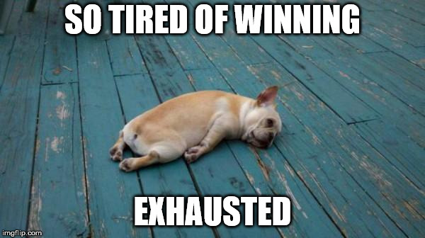 tired dog | SO TIRED OF WINNING EXHAUSTED | image tagged in tired dog | made w/ Imgflip meme maker