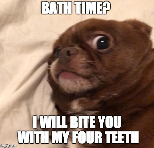 Sprout Part 2 | BATH TIME? I WILL BITE YOU WITH MY FOUR TEETH | image tagged in sprout,ugly,dog | made w/ Imgflip meme maker
