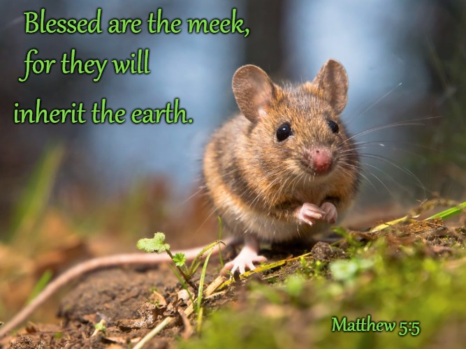 Matthew 5:5 Beatitude Blessed Are the Meek | Blessed are the meek, Matthew 5:5 for they will inherit the earth. | image tagged in bible,holy bible,holy spirit,bible verse,verse,god | made w/ Imgflip meme maker