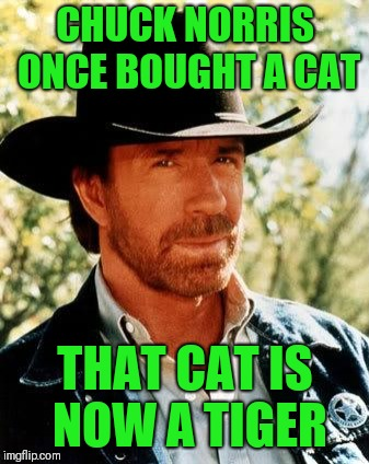 Chuck Norris Week! A Sir_Unknown/PowerMetalHead event Aug. 6-13 |  CHUCK NORRIS ONCE BOUGHT A CAT; THAT CAT IS NOW A TIGER | image tagged in memes,chuck norris,chuck norris week,sir_unknown,powermetalhead | made w/ Imgflip meme maker