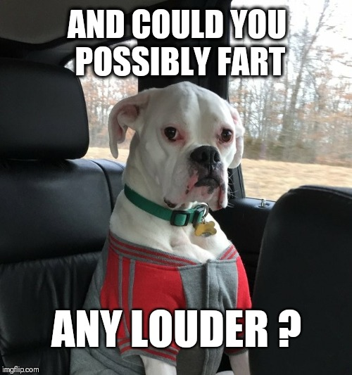 Disgruntled Dog Stare | AND COULD YOU POSSIBLY FART ANY LOUDER ? | image tagged in disgruntled dog stare,memes,fart,dogs,disgruntled | made w/ Imgflip meme maker