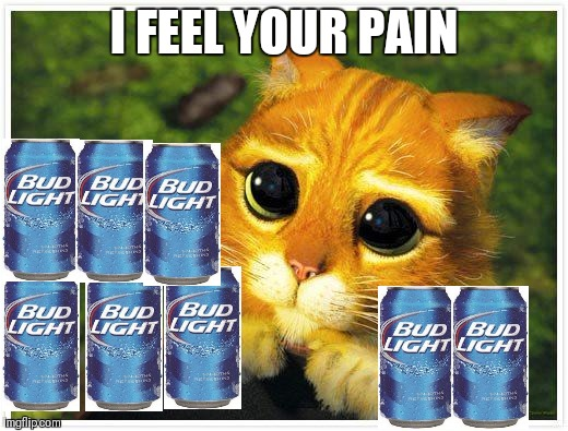 Sorry Kitty | I FEEL YOUR PAIN | image tagged in sorry kitty | made w/ Imgflip meme maker