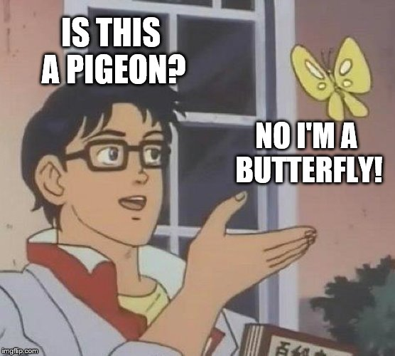If this meme was reality | IS THIS A PIGEON? NO I'M A BUTTERFLY! | image tagged in memes,is this a pigeon | made w/ Imgflip meme maker