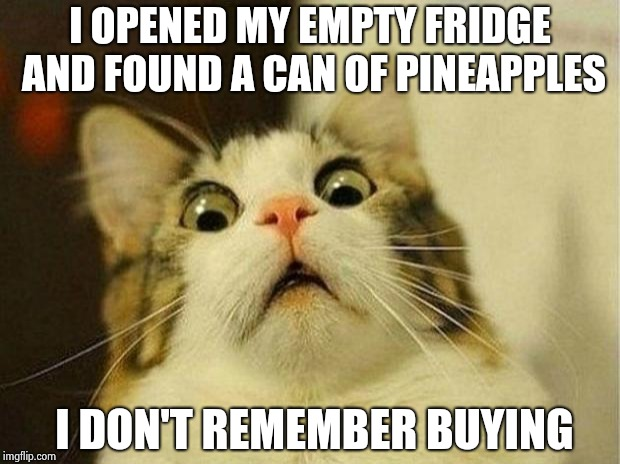 Scared Cat Meme | I OPENED MY EMPTY FRIDGE AND FOUND A CAN OF PINEAPPLES I DON'T REMEMBER BUYING | image tagged in memes,scared cat | made w/ Imgflip meme maker