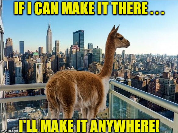 Big City Drama Llama, It's Up To You, New York..New York | IF I CAN MAKE IT THERE . . . I'LL MAKE IT ANYWHERE! | image tagged in drama llama,memes,new york city,so much drama | made w/ Imgflip meme maker