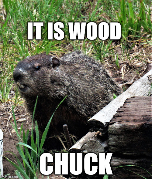 wouldchuck | IT IS WOOD CHUCK | image tagged in wouldchuck | made w/ Imgflip meme maker