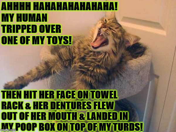 AHHHH HAHAHAHAHAHAHA! MY HUMAN TRIPPED OVER ONE OF MY TOYS! THEN HIT HER FACE ON TOWEL RACK & HER DENTURES FLEW OUT OF HER MOUTH & LANDED IN | image tagged in douche bag | made w/ Imgflip meme maker