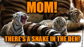 There's a snake in my den! Tiger Week 2018, July 29 - August 5, a TigerLegend1046 event | MOM! THERE'S A SNAKE IN THE DEN! | image tagged in memes,tiger week 2018,tiger week,tigerlegend1046,snake,den | made w/ Imgflip meme maker