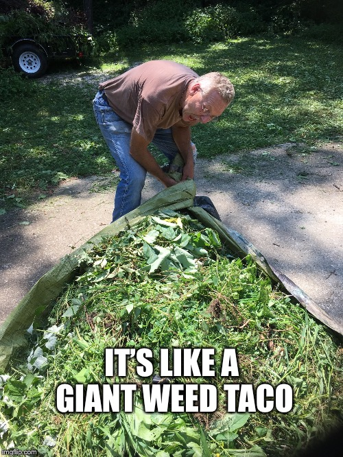 Would You Like Salsa With That | IT'S LIKE A GIANT WEED TACO | image tagged in giant,weed,taco,yardwaste,landscaping,hauling | made w/ Imgflip meme maker