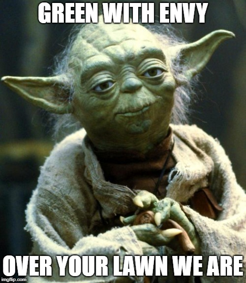 Star Wars Yoda Meme | GREEN WITH ENVY OVER YOUR LAWN WE ARE | image tagged in memes,star wars yoda | made w/ Imgflip meme maker
