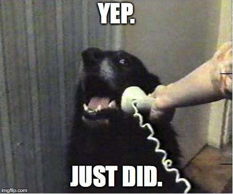 Yes this is dog | YEP. JUST DID. | image tagged in yes this is dog | made w/ Imgflip meme maker