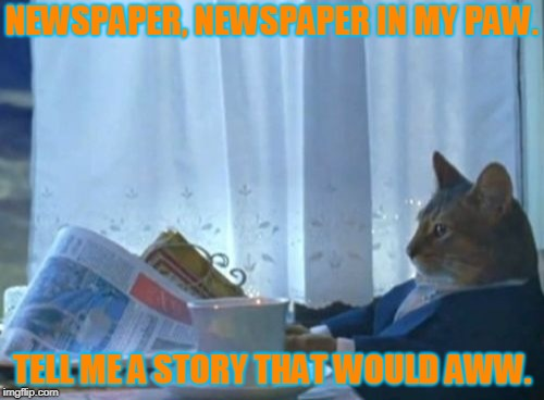 Another borring day for McFluffingsun | NEWSPAPER, NEWSPAPER IN MY PAW. TELL ME A STORY THAT WOULD AWW. | image tagged in memes,i should buy a boat cat,rhymes,cat newspaper | made w/ Imgflip meme maker