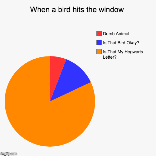 When a bird hits the window | Is That My Hogwarts Letter?, Is That Bird Okay?, Dumb Animal | image tagged in funny,pie charts | made w/ Imgflip pie chart maker