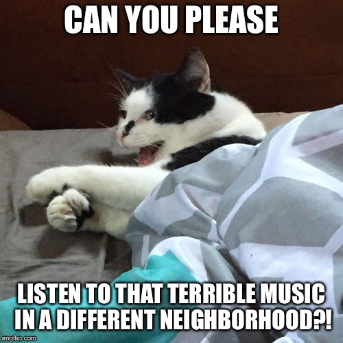 You Should've Dealt With Your Teen Angst Two Decades Ago | CAN YOU PLEASE LISTEN TO THAT TERRIBLE MUSIC IN A DIFFERENT NEIGHBORHOOD?! | image tagged in bad music,cat,neighbors,neighborhood,music | made w/ Imgflip meme maker
