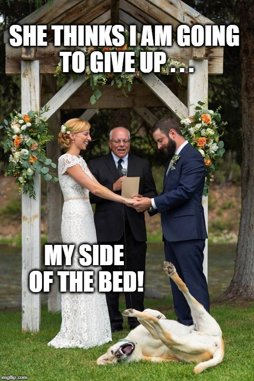 It is my side of the bed! | SHE THINKS I AM GOING TO GIVE UP . . . MY SIDE OF THE BED! | image tagged in dogs,funny dogs,animals,weddings,wedding crashers,meme | made w/ Imgflip meme maker