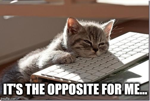 Bored Keyboard Cat | IT'S THE OPPOSITE FOR ME... | image tagged in bored keyboard cat | made w/ Imgflip meme maker