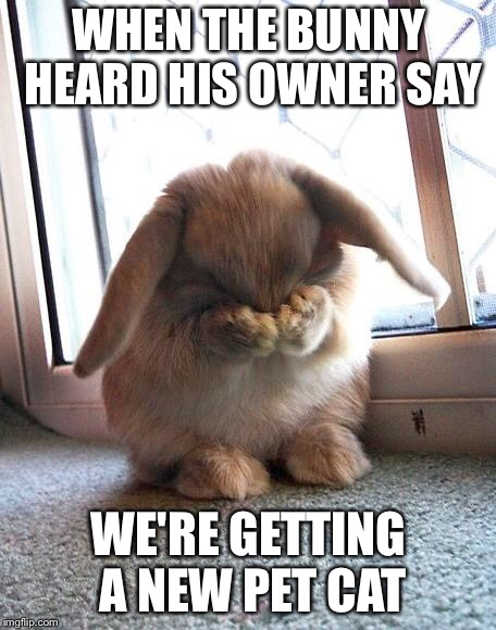 embarrassed bunny | WHEN THE BUNNY HEARD HIS OWNER SAY WE'RE GETTING A NEW PET CAT | image tagged in embarrassed bunny | made w/ Imgflip meme maker