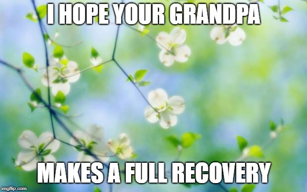 flowers | I HOPE YOUR GRANDPA MAKES A FULL RECOVERY | image tagged in flowers | made w/ Imgflip meme maker