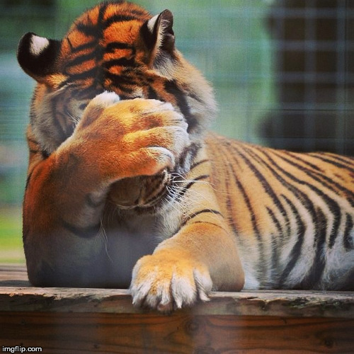 Facepalm Tiger | JJ | image tagged in facepalm tiger | made w/ Imgflip meme maker