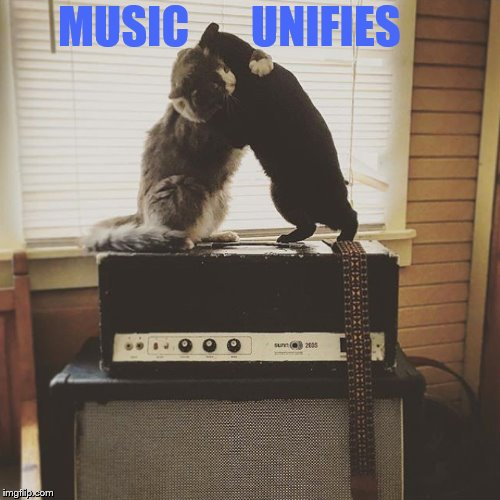 A Simple Message | MUSIC       UNIFIES | image tagged in memes,cats,amp,music,message,1forpeace | made w/ Imgflip meme maker