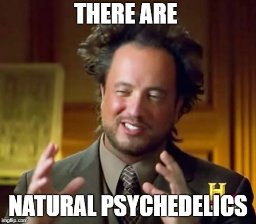 Ancient Aliens Meme | THERE ARE NATURAL PSYCHEDELICS | image tagged in memes,ancient aliens | made w/ Imgflip meme maker