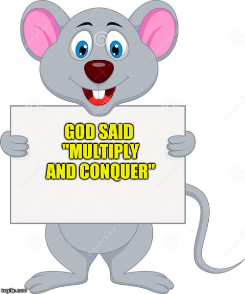 "multiply and conquer | GOD SAID ""MULTIPLY AND CONQUER"" 