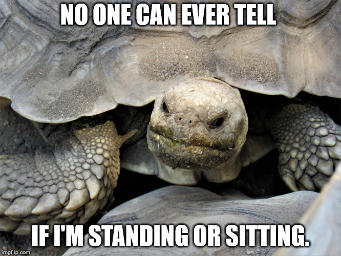 grumpy tortoise | NO ONE CAN EVER TELL IF I'M STANDING OR SITTING. | image tagged in grumpy tortoise | made w/ Imgflip meme maker