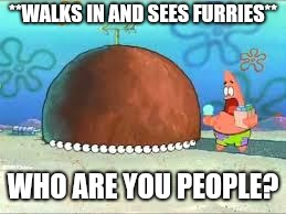 WHO ARE YOU PEOPLE? | **WALKS IN AND SEES FURRIES** WHO ARE YOU PEOPLE? | image tagged in who are you people | made w/ Imgflip meme maker