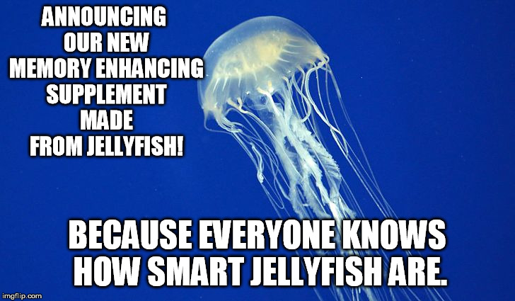 ANNOUNCING OUR NEW MEMORY ENHANCING SUPPLEMENT MADE FROM JELLYFISH! BECAUSE EVERYONE KNOWS HOW SMART JELLYFISH ARE. | image tagged in jellyfish | made w/ Imgflip meme maker
