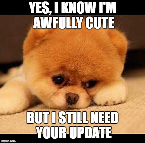 sad dog | YES, I KNOW I'M AWFULLY CUTE BUT I STILL NEED YOUR UPDATE | image tagged in sad dog | made w/ Imgflip meme maker