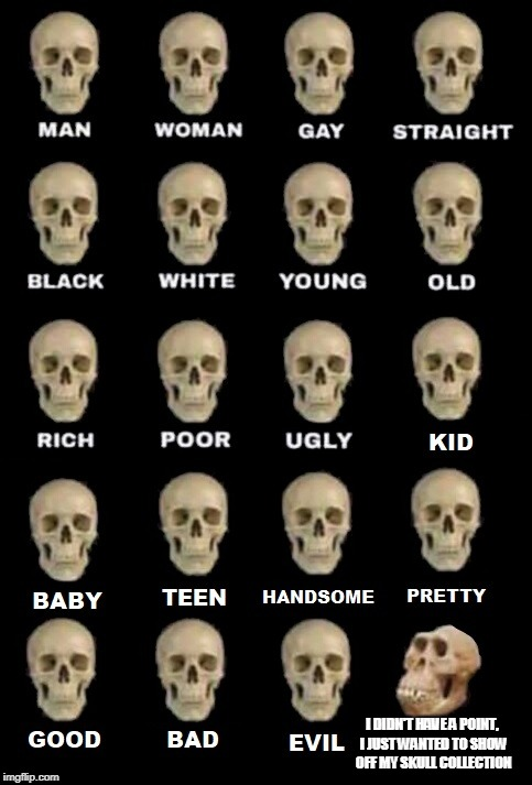 I DIDN'T HAVE A POINT, I JUST WANTED TO SHOW OFF MY SKULL COLLECTION | image tagged in idiot skull extended | made w/ Imgflip meme maker