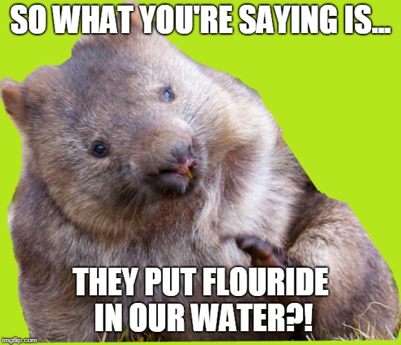 Conspiracy Wombat | SO WHAT YOU'RE SAYING IS... THEY PUT FLOURIDE IN OUR WATER?! | image tagged in conspiracy theory,it's a conspiracy,conspiracy theories | made w/ Imgflip meme maker