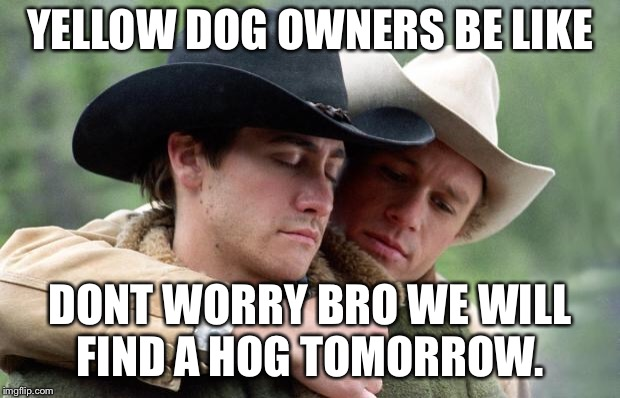 Brokeback Mountain | YELLOW DOG OWNERS BE LIKE DONT WORRY BRO WE WILL FIND A HOG TOMORROW. | image tagged in brokeback mountain | made w/ Imgflip meme maker