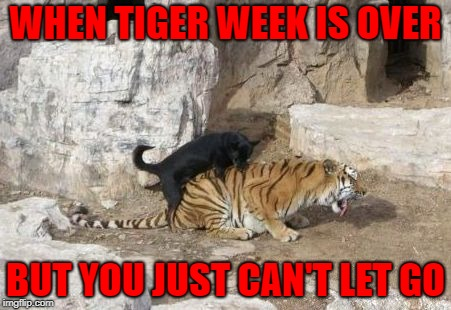 My friends tell me I should try new things!!! | WHEN TIGER WEEK IS OVER BUT YOU JUST CAN'T LET GO | image tagged in dog vs tiger,memes,tiger week,funny,animals,tiger | made w/ Imgflip meme maker